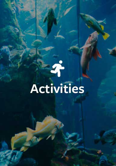 Activities in Great Barrier Reef